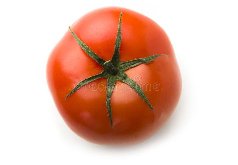 Einzelne Tomate stockfoto
