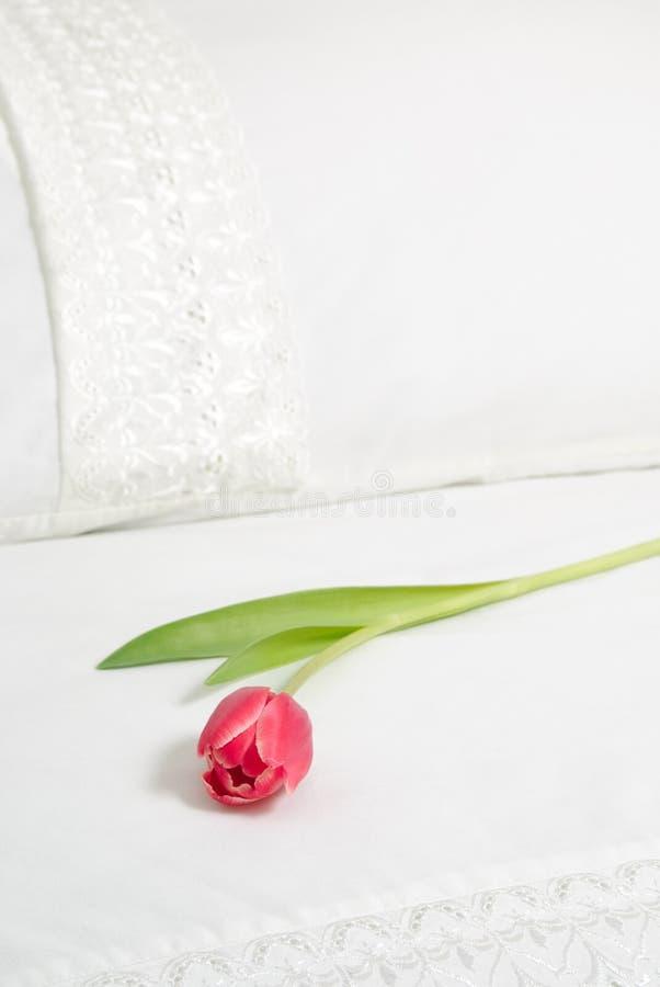 Einzelne Tulpe auf Bett lizenzfreies stockbild