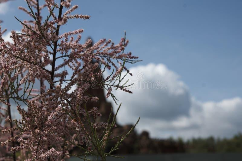 Einzelne Wüstenpflanze mit Gebirgshintergrund lizenzfreies stockfoto