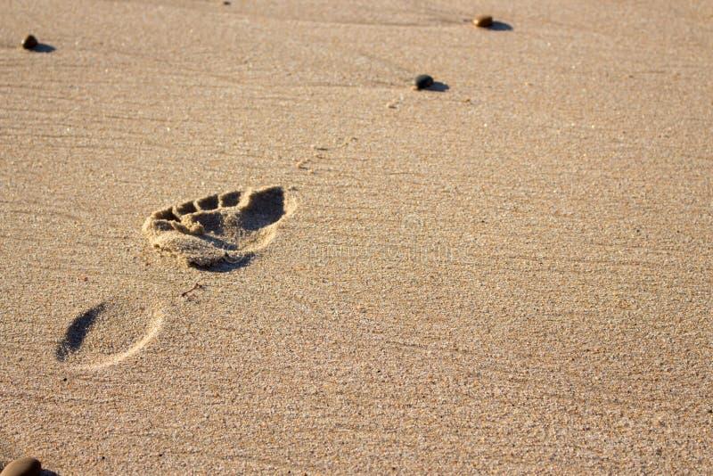 Einzelner Abdruck auf Sand Menschlicher Schritt an der K?ste Setzen Sie Ferien auf den Strand Freizeit und Reisekonzept lizenzfreies stockbild