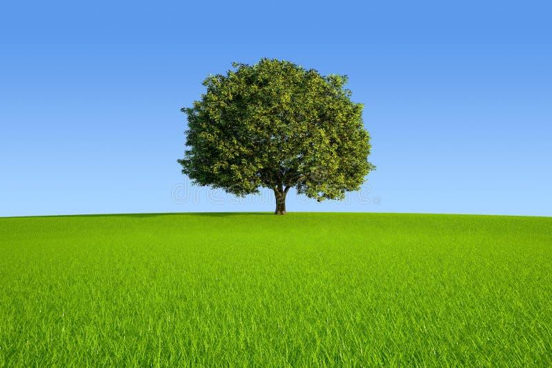 Einzelner Baum stock abbildung