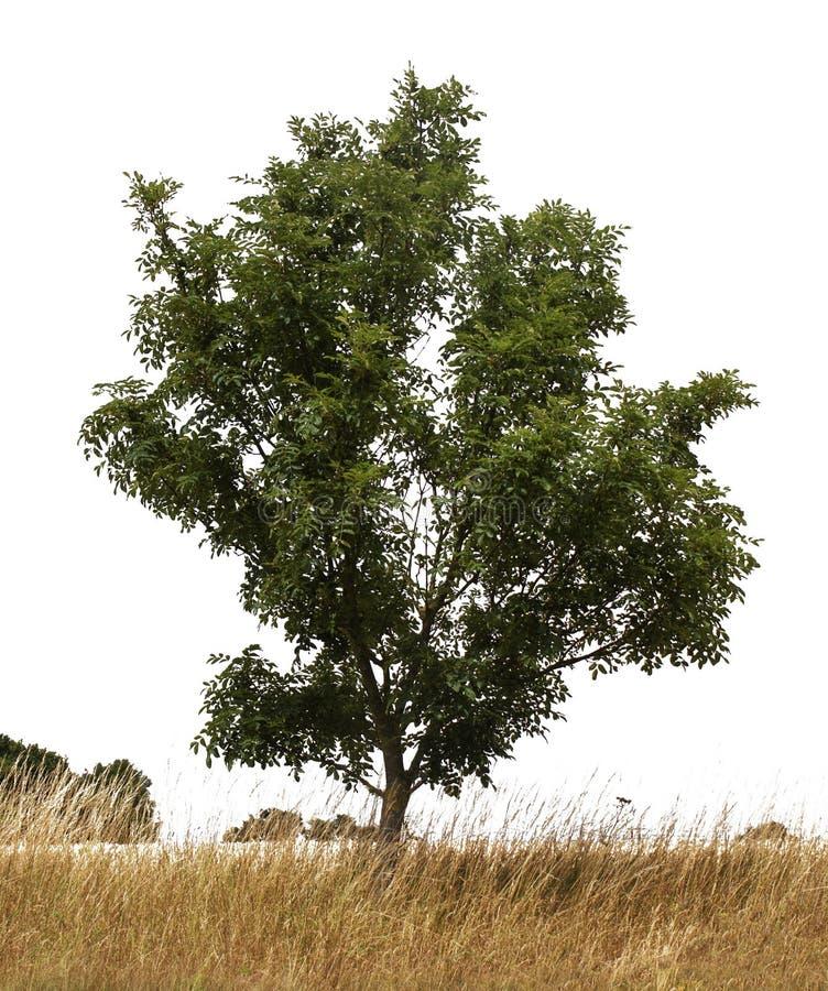 Einzelner Baum stockfotos