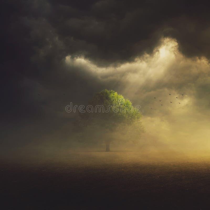 Einzelner Baum auf dem Gebiet stockbild
