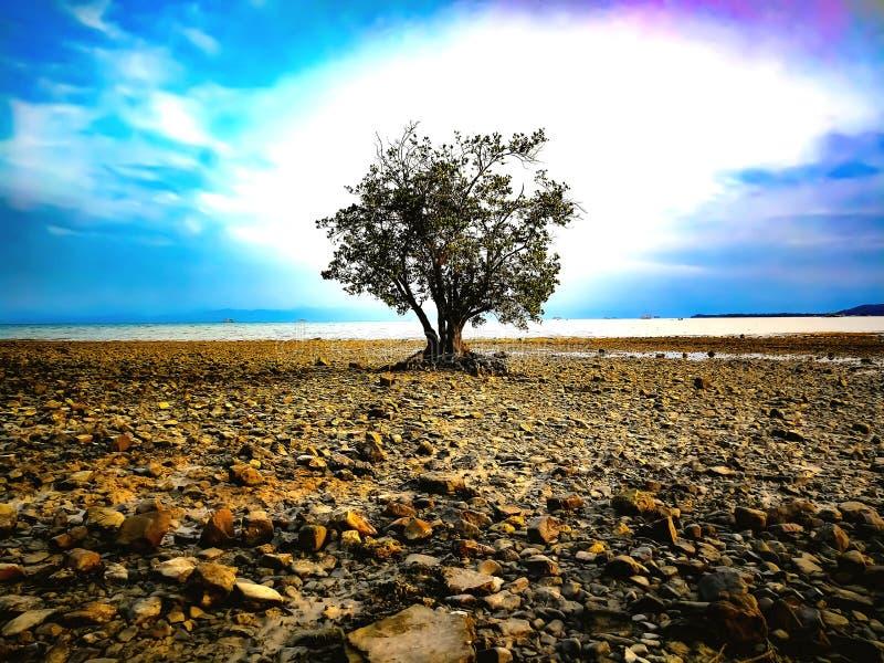 Einzelner Baum auf den Felsen stockfoto