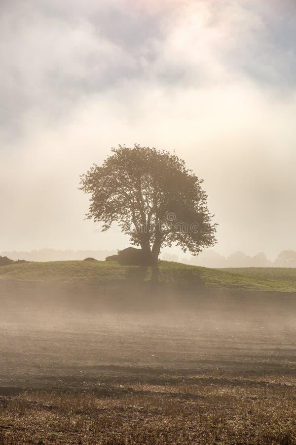 Einzelner Baum auf einem Hügel mit Morgennebel lizenzfreie stockbilder