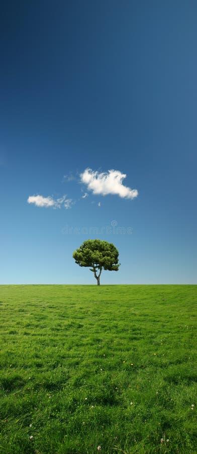Einzelner Baum auf einer schönen und beträchtlichen grünen Wiese stockbild
