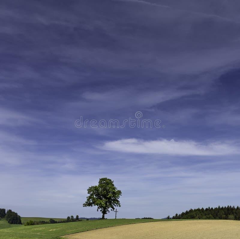 Einzelner Baum auf Feld mit Kreuz lizenzfreie stockbilder