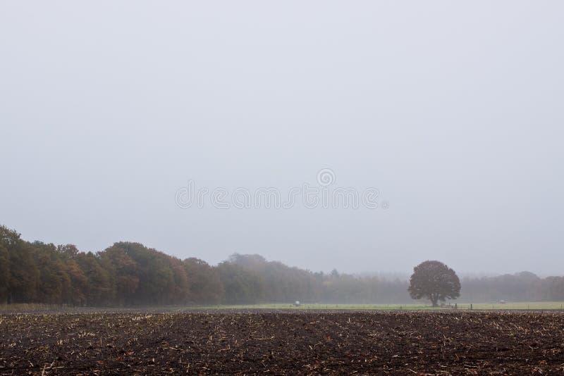 Einzelner Baum, der in der Landschaft steht lizenzfreie stockfotos
