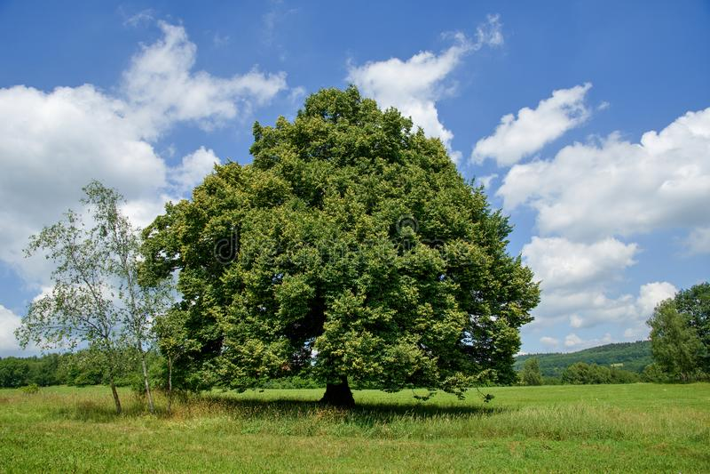 Einzelner Baum in der Landschaft lizenzfreies stockbild