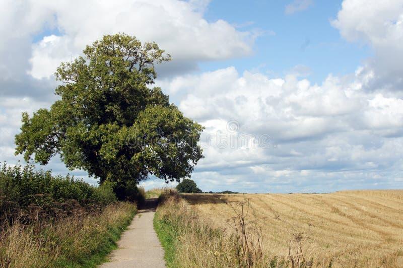 Einzelner Baum durch die Bahn in Yorkshire-Landschaft lizenzfreie stockbilder