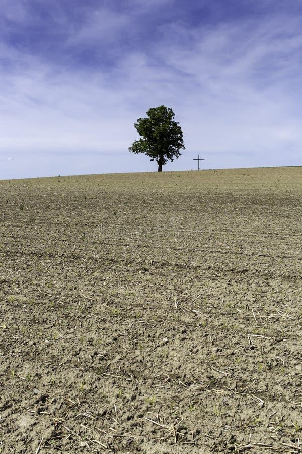Einzelner Baum nahe bei einem Kreuz stockbilder