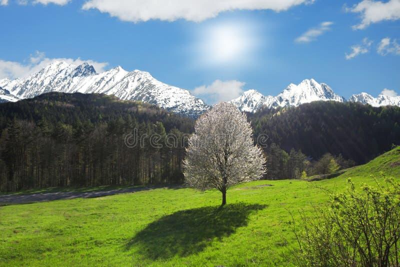 Einzelner blühender Baum gegen Sonne stockfotografie