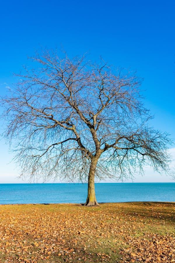 Einzelner bloßer Baum entlang dem Ufer des Michigansees in Chicago lizenzfreie stockbilder