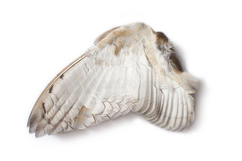 Einzelner Eulenflügel lizenzfreie stockfotos