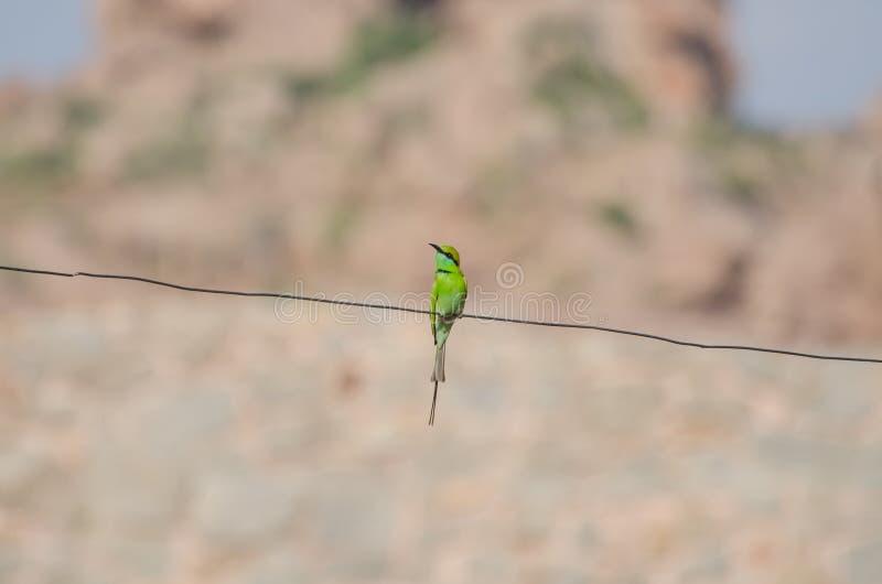 Einzelner Grüner Vogel Auf Einem Draht Stockfoto - Bild von hell ...