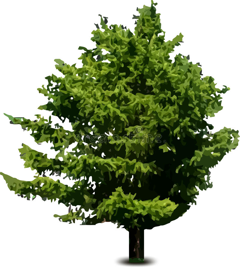 Einzelner Kieferntannenbaum getrennt auf Weiß. Vektor stock abbildung