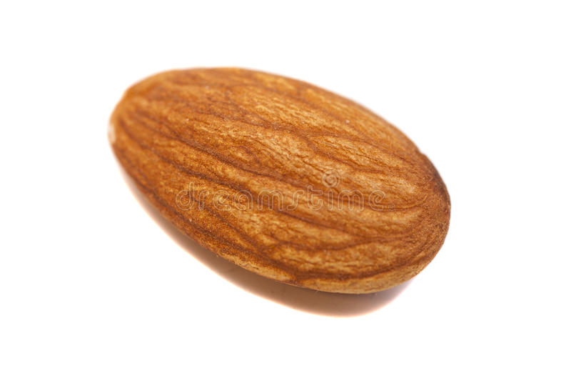 Einzelner Mandel-Samen-Abschluss herauf extremen Makroschuß stockfoto