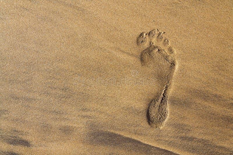 Einzelner menschlicher barfüßigabdruck des rechten Fußes im braunen Strandhintergrund, in den Sommerferien oder im Klimawandelkon stockfotografie