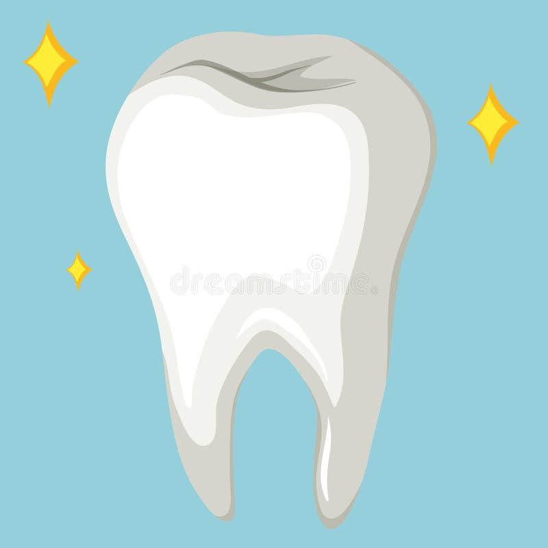 Ausgezeichnet Menschliche Zahnanatomie Zeitgenössisch - Anatomie ...