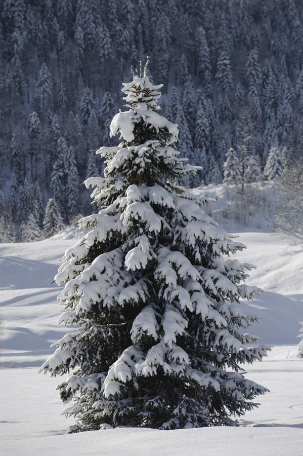 Einzelner Tannenbaum im Winterschnee stockfotos