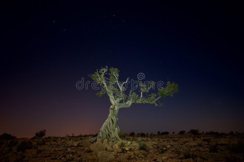 Einzelner toter stehender Baum nachts stockfotos