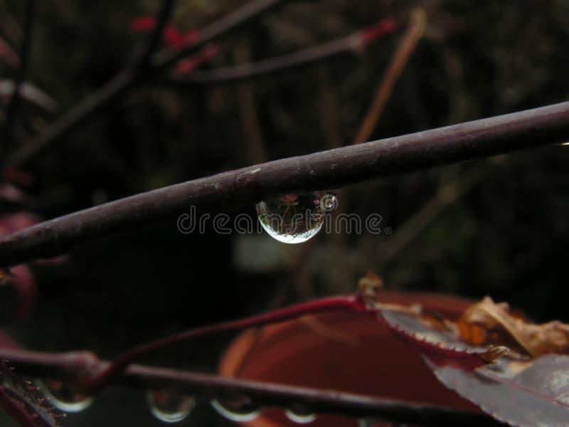 Einzelner Tropfen auf einem Zweig lizenzfreie stockbilder