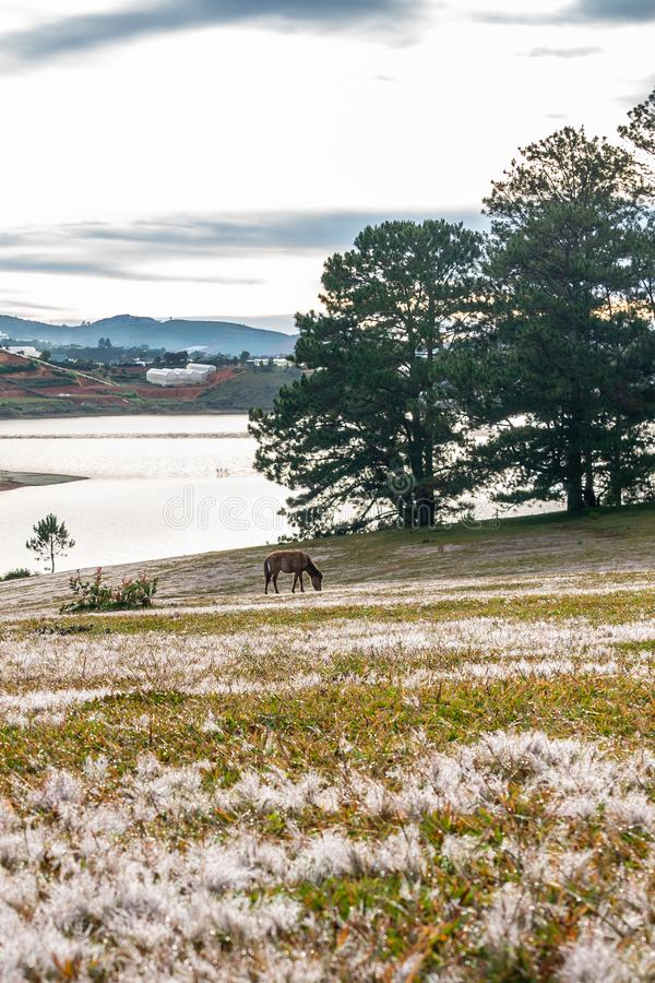Einzelnes braunes Pferd auf der rosa Rasenfläche neben See lizenzfreie stockbilder