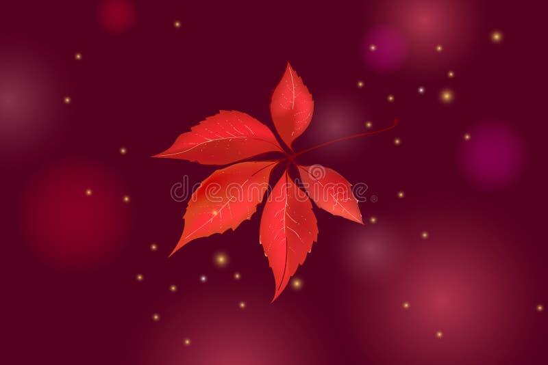 Einzelnes Herbsttraubenblatt lokalisiert auf schönem dunkelbraunem Hintergrund mit Lichtern und Scheinen stock abbildung