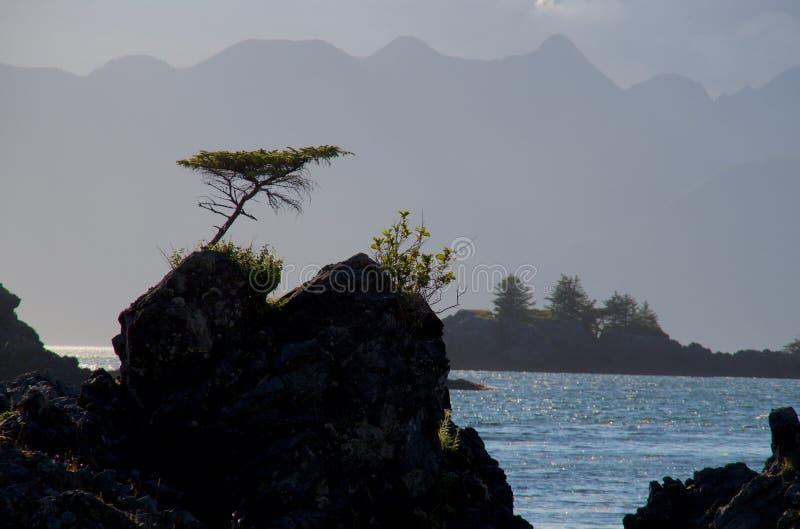 Einzigartiger geformter einziger zwergartiger gezierter Baum, der von der Spitze des Felsens mit Bergen von Brookes-Halbinsel im  stockfotos