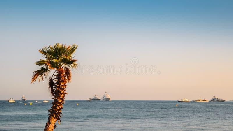 Einzige Palme, die das französische Riviera Meditteranean übersieht stockfoto