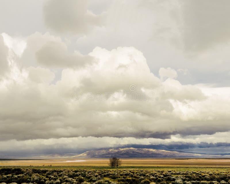 Einziger Bauernhof-Baum 2 stockfoto