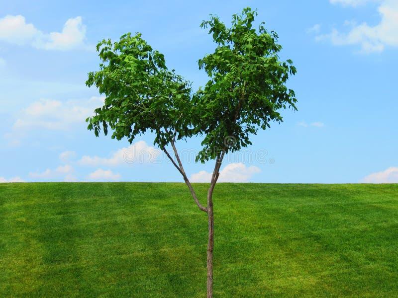 Einziger Baum über grünes Gras-blauem Himmel lizenzfreie stockbilder