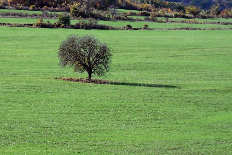 Einziger Baum auf dem Gebiet stockfoto