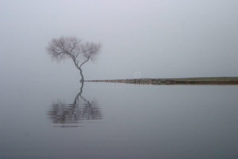 Einziger Baum auf Huk Nebeliger Morgen stockfoto