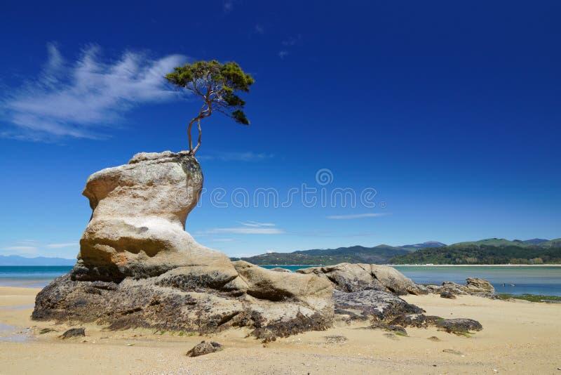 Einziger Baum, der heraus ein Leben in Abel Tasman National Park, Neuseeland mühsam erarbeitet lizenzfreies stockbild