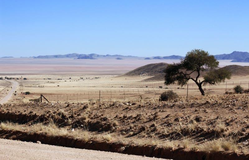Einziger Baum in der rauen Wüste lizenzfreie stockfotos