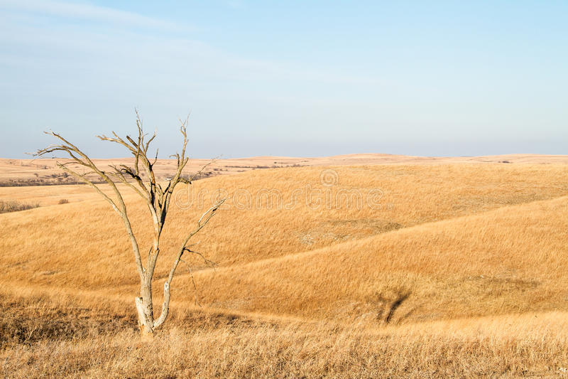 Einziger Baum in Flint Hills von Kansas lizenzfreie stockbilder