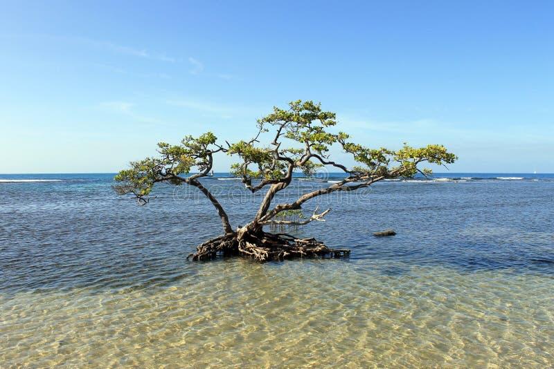 Einziger Baum im seichten Salzwasser stockbilder