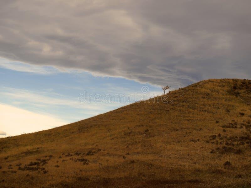 Einziger Baum mit Sturm-Wolken stockfotos