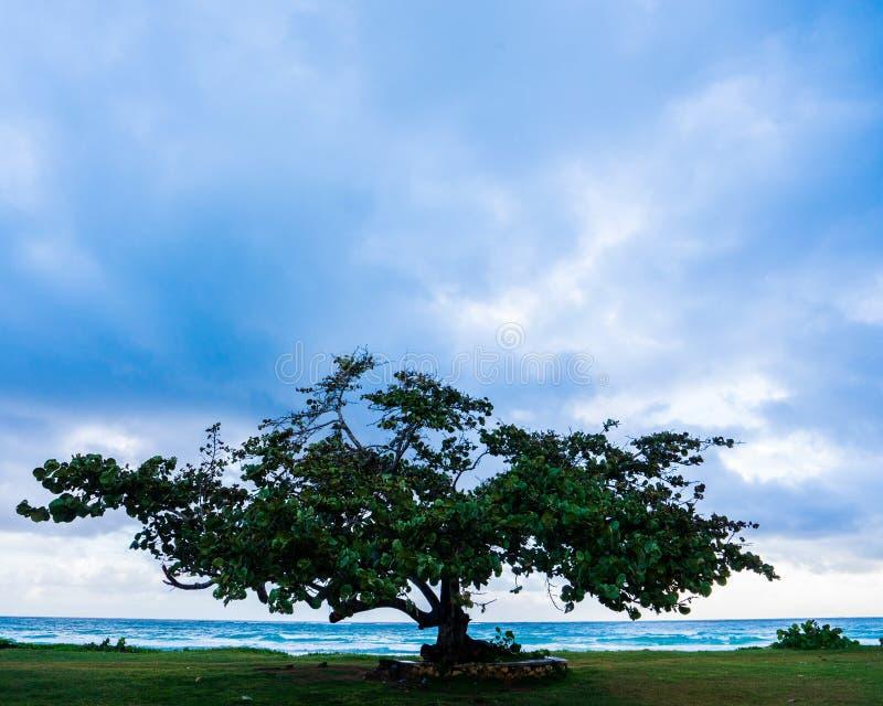 Einziger Baum nahe jamaikanischem entferntufer bei Sonnenaufgang lizenzfreie stockfotos
