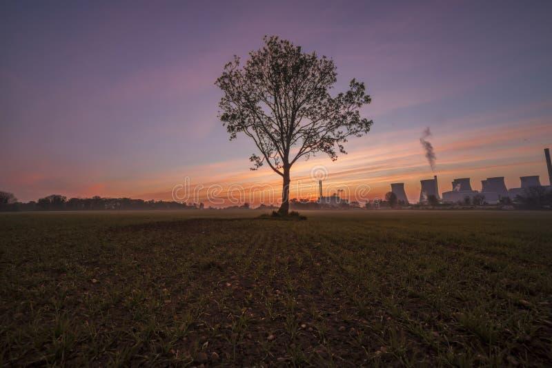 Einziger Baum und Ferrybridge-Kraftwerk stockbild