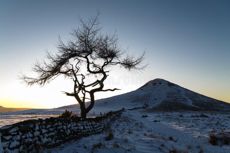 Einziger Baum - Winter stockfoto