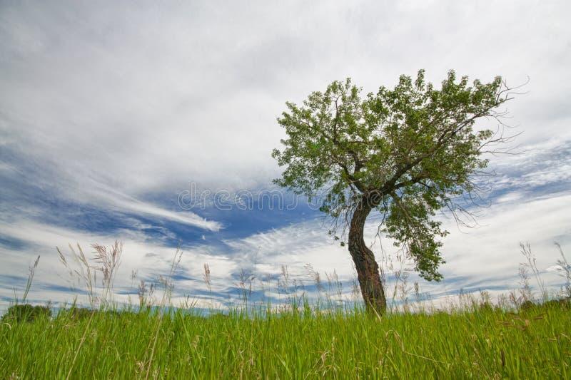Einziger Bent Tree stockfotos