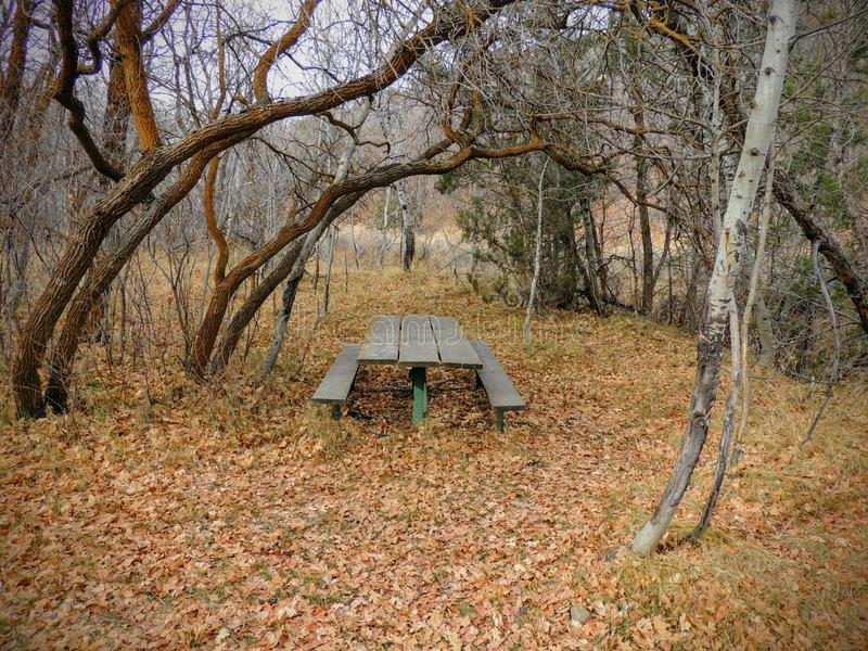 Einziger hölzerner Picknicktisch im späten Fallpanoramawald durch Bäume auf der gelben Gabel und Rose Canyon Trails in Oquirrh-Be lizenzfreies stockfoto