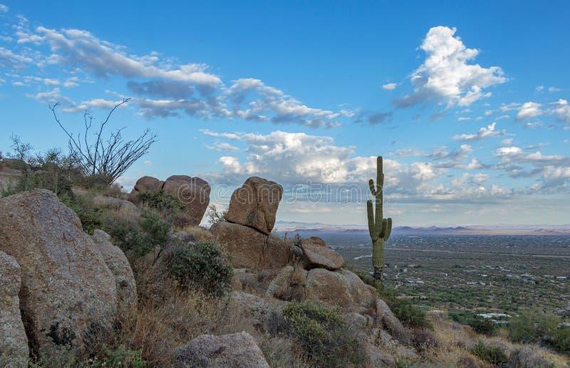 Einziger Kaktus auf einem Ridge Overlookings Boden vally nahe Phoenix stockfotos
