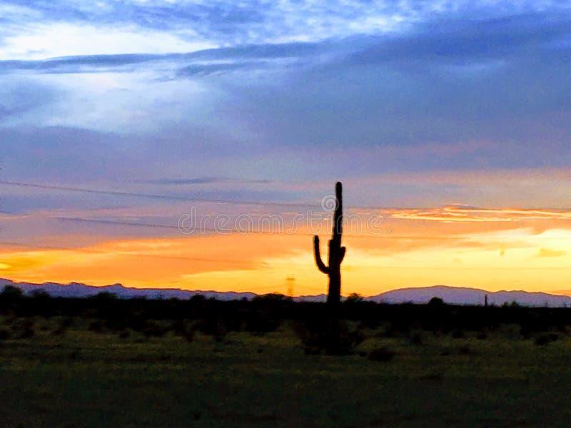 Einziger Kaktussonnenuntergang orange Blau stockfoto
