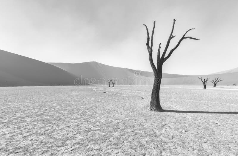 Einziger toter Baum in Dooievlei lizenzfreie stockfotos