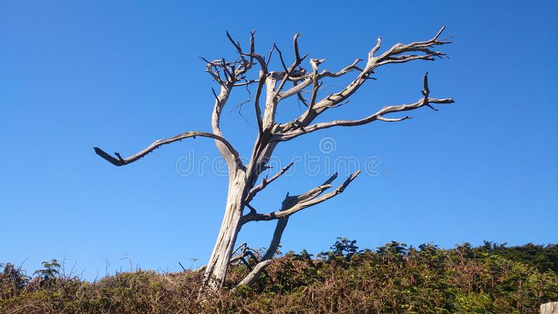 Einziger trockener toter Baumstamm in seiner Ausgangsmaske stockfoto