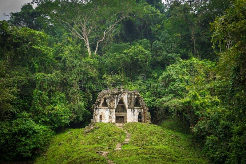 Einziges Dschungel-Gebäude lizenzfreie stockfotografie