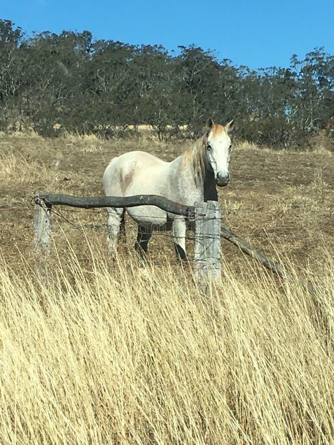 Einziges Pferd lizenzfreies stockbild